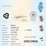photo of birth certificate